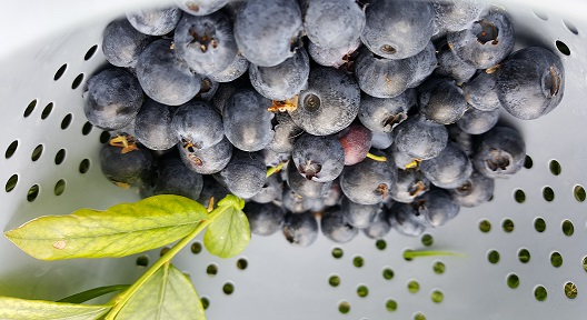 Blueberries - good enough to eat.